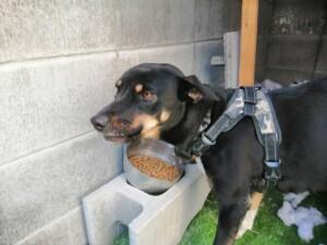 宮崎市ミックス犬